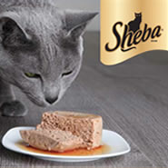 Sheba Cat Food Photo