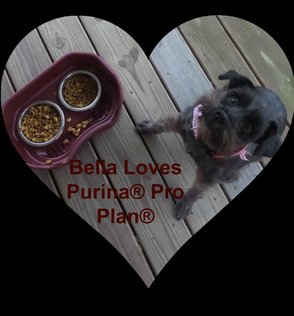 Purina Bella Dog Food Ingredients