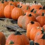 5 Fun Things To Do With Pumpkin