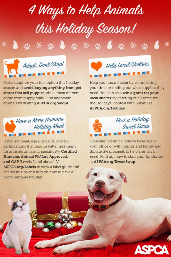 4 Ways to Help Animals this Holiday Season