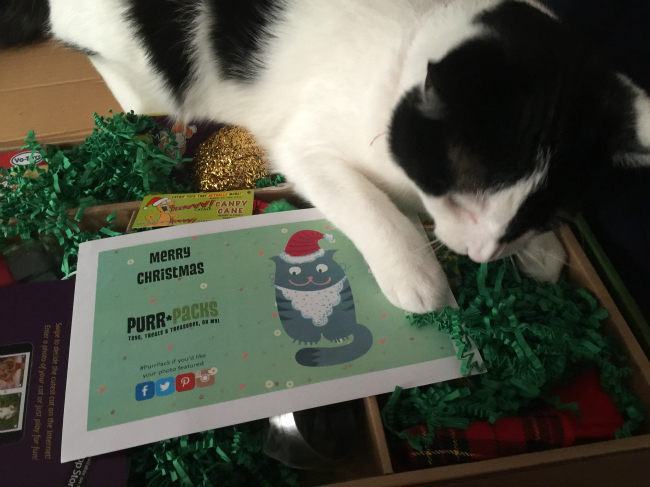 Purr-Packs Make a Great Gift For Cats #FAMChristmas