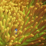 Finding Dory Trailer Available Now! #HaveYouSeenHer #FindingDory