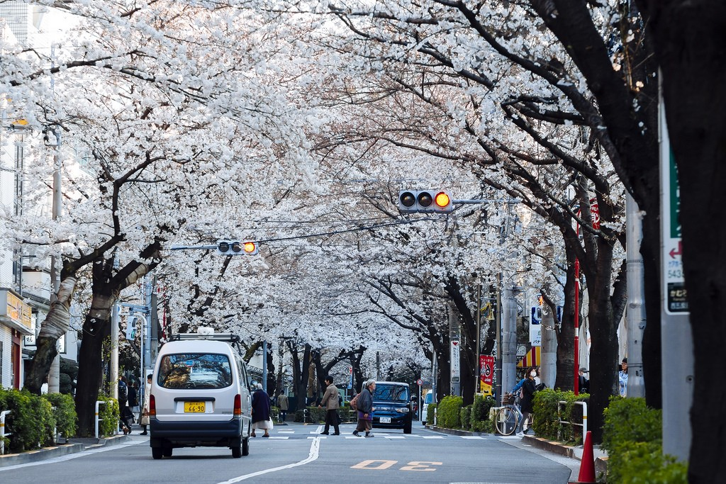 5_toyko spring