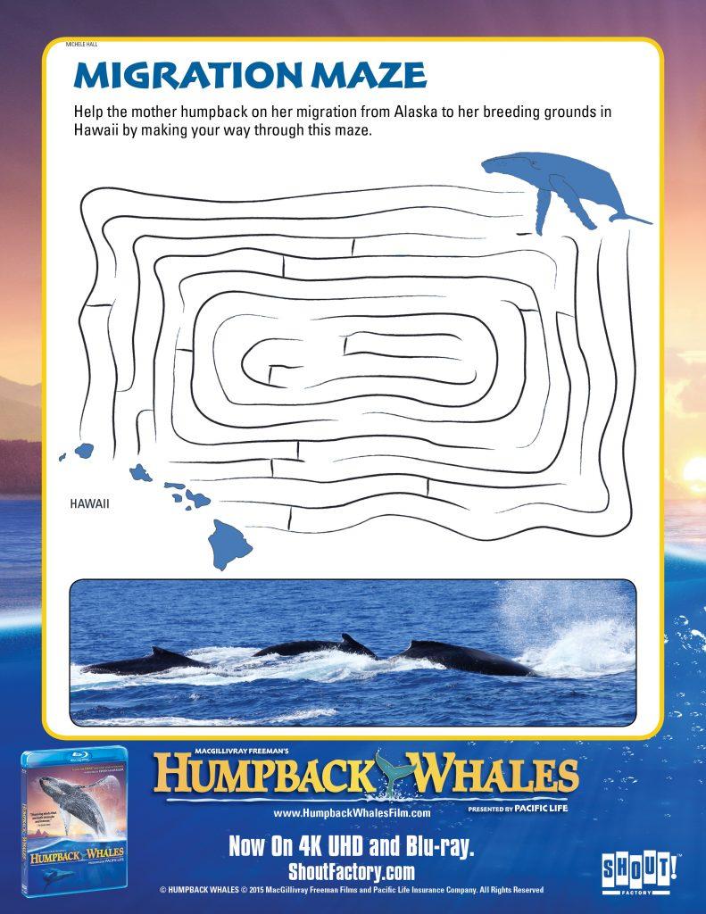 HumpbackWhales_Maze