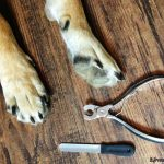 MIUPET Professional Nail Clipper Set Makes Nail Trims a Breeze!