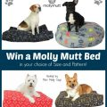 Molly Mutt Dog Bed Giveaway!