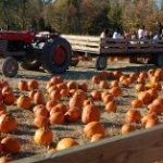 See Fall In Color with Fall on the Farm at Blooms and Berries @usfg