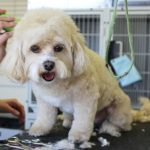 Why Visit a Groomer Instead of Grooming Your Pet Yourself?