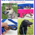 Win 3 Nifti SafeLatch Leashes in your choice of colors!