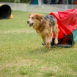 How A Dog Behaviourist and A Dog Trainer Differ