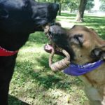 Mav4Life Rope Dog Toys are Great for Relieving Pent up Energy!