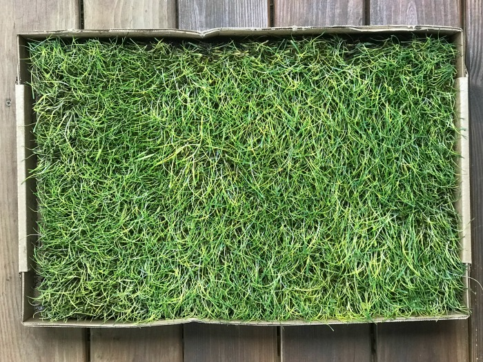 Fresh Patch Real Grass is the Perfect Potty Place for Small Spaces