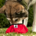 Rad Dog Collapsible Pocket Bowl is the Perfect Solution for On-The-Go Pets!