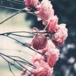 Ideas to Brighten up your Winter Garden