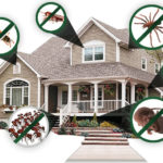 4 Ways To Prevent A Pest Infestation In Your Home