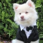 Getting Married? Pet-Friendly Wedding Ideas to Include Your Furry Family Members
