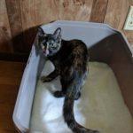 PrettyLitter Helps Monitor Cat Health
