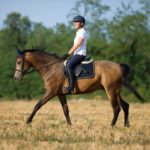 The Basics of Horse Ownership